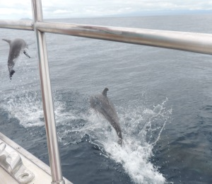 lucky shot of jumping dolphins