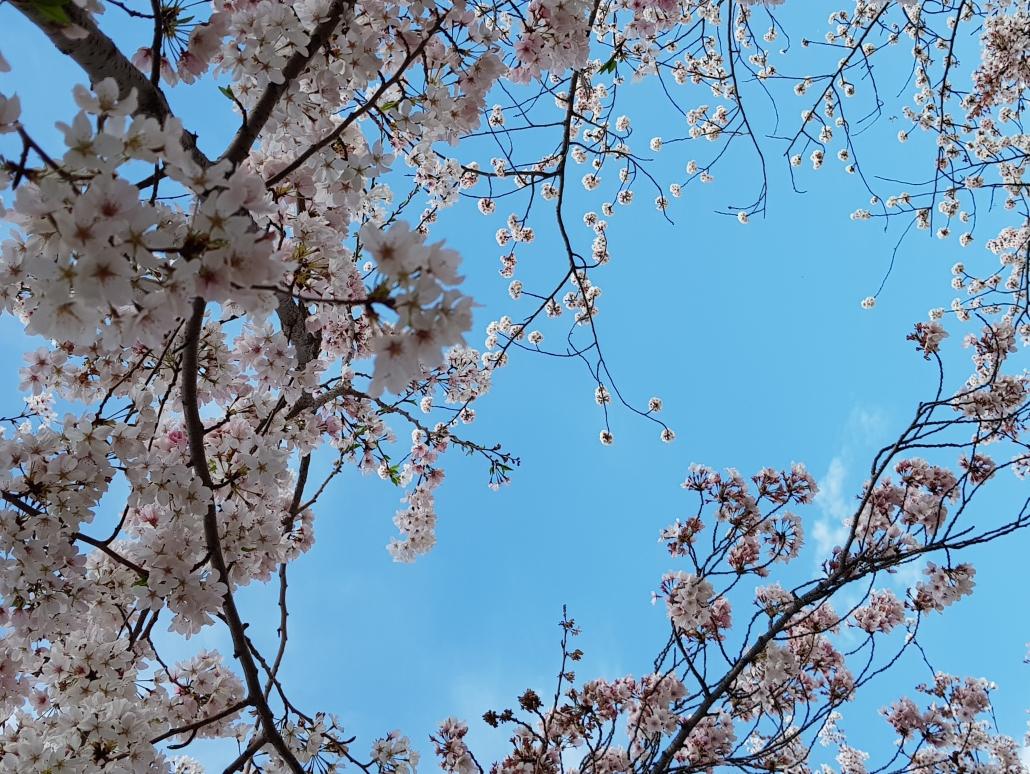 sky-view-blossom.jpg